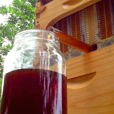"""""""รังผึ้ง"""" นวัตกรรมใหม่…สามารถเก็บน้ำผึ้งโดยไม่ต้องกวนผึ้งเลย"""