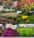 ไม้ดอกไม้ประดับ (สารานุกรมไทยสำหรับเยาวชนฯ เล่มที่ 30)