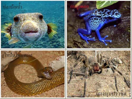 9 สุดยอดสัตว์มีพิษที่อันตรายที่สุดในโลก