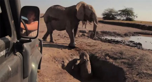 ประทับใจ! คลิปช่วยลูกช้างขึ้นจากหลุม ก่อนวิ่งหาแม่ด้วยความดีใจ