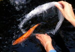 ปล่อยปลาได้บุญสะเดาะเคราะห์ เสริมดวง