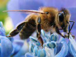 """มหัศจรรย์ """"ผึ้งบำบัด"""" รักษาอาการเรื้อรัง-ไมเกรน-อัลไซเมอร์ กระแสตอบรับล้นหลาม"""