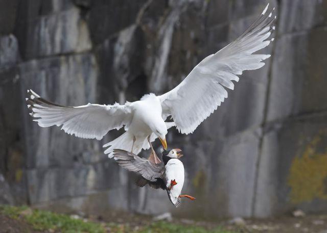 สุดยอดภาพสัตว์ Photography จากการประกวด ภาพภ่ายสัตว์ป่า ปี2012