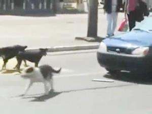 """วิธีควบคุมรถเมื่อ """"สุนัข-มอไซค์"""" ตัดหน้า"""