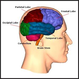 การเรียนรู้โดยใช้สมองเป็นฐาน (Brain based Learning: BBL)