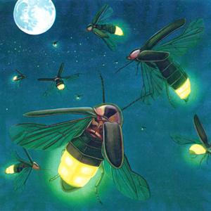 แสงสว่างของหิ่งห้อยมาจากไหน