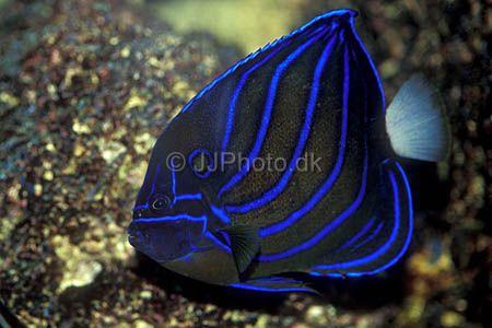 ปลา...สินสมุทร สรวงฟ้า ของเล่นใหม่ นักเลี้ยงปลาตู้
