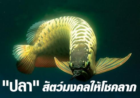 ปลา สัตว์มงคลนำโชคลาภ