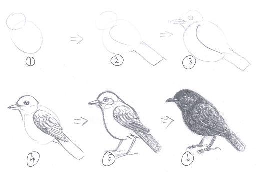 การวาดภาพนกเบื้องต้น