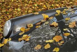 คุณเป็นคนหนึ่งใช่ไหมที่ชอบจอดรถใต้ต้นไม้ เพื่อไม่ให้รถร้อน ลองอ่านบทความนี้ดู !!