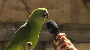 วิธีการสอนนกแก้ว นกขุนทองพูด