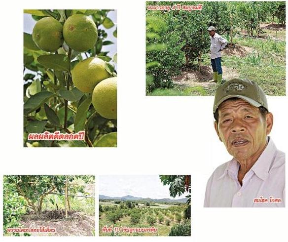 ปลูกมะนาว 10 ไร่ รายได้ 1.8 ล้านบาทต่อปี