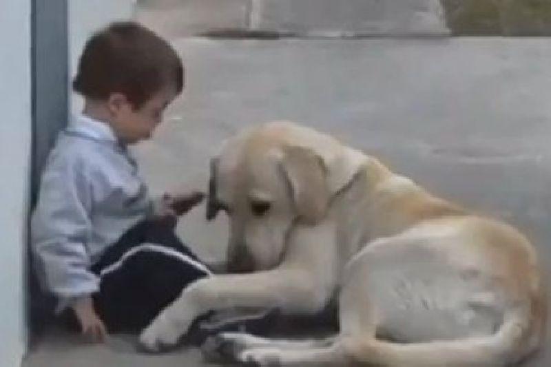 เกินบรรยาย! คลิปสุนัขปลอบโยนหนูน้อยพิการ ซึ้งจนต้องหลั่งน้ำตา