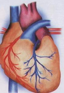 การออกกำลังของผู้ที่มีโรคหัวใจ