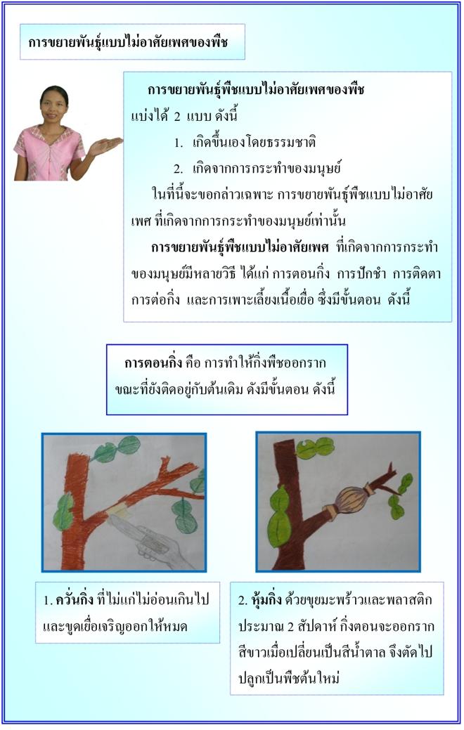 ชุดกิจกรรมการเรียนรู้วิทยาศาสตร์ เล่ม 7 วัฏจักรชีวิตพืชดอก ผลงานครูพรชนก ยอดกระโทก