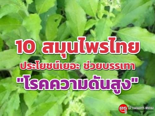 """10 สมุนไพรไทย ประโยชน์เยอะ ช่วยบรรเทา """"โรคความดันสูง"""""""
