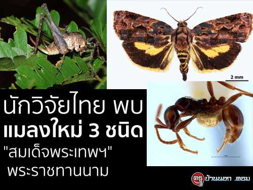 """นักวิจัยไทย พบแมลงใหม่ 3 ชนิด """"สมเด็จพระเทพฯ"""" พระราชทานนาม"""