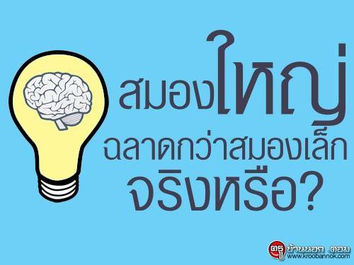 จริงหรือที่คนมีสมองขนาดใหญ่ฉลาดมากกว่าคนที่มีสมองขนาดเล็ก ? หาคำตอบได้ที่นี่!