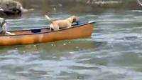 สุดซึ้ง หมาช่วยหมา ที่กำลังลอยคออยู่บนเรือ